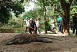 Bali and Komodo package in 9 days up to exploring Komodo National Park rinca