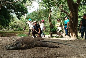 Komodo national park at rinca