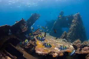 tulamben, diving spot, karangasem, bali tourism articles