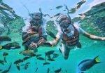 Bako snorkeling spot, flores tours